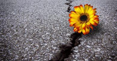 Quem não se reinventa em tempo hábil sucumbe ao fracasso